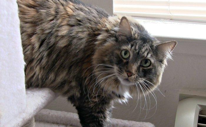 Cat for Adoption Craigslist